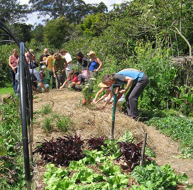 Djanbung gardens permaculture course