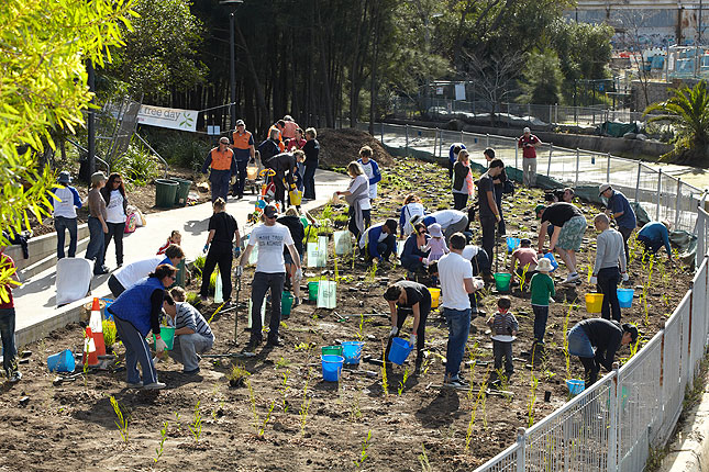 national tree day group planting