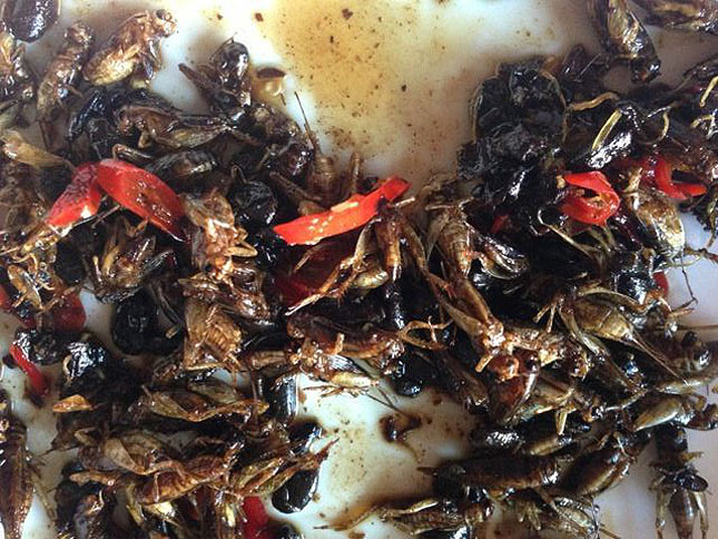 edible insects cooking