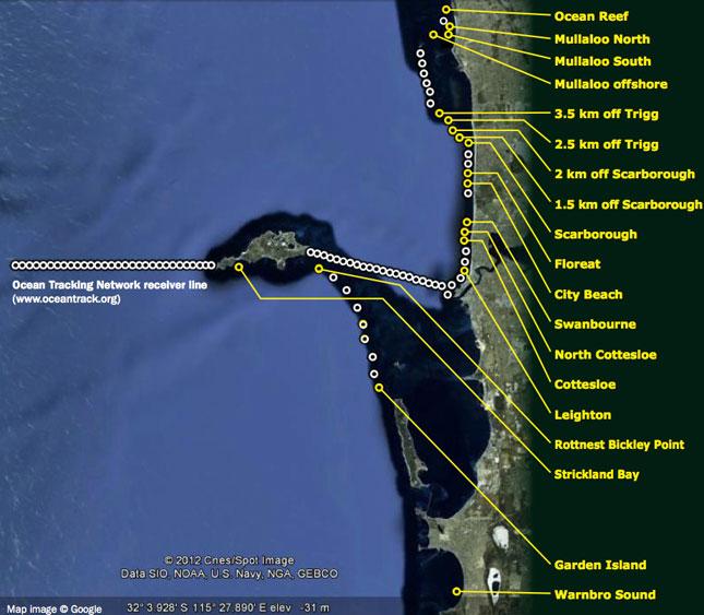 shark tracking western australia