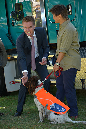 cane toad detector dog minister