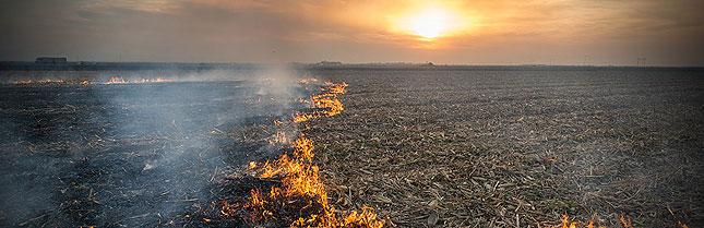 carbon farming initiative
