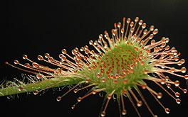 intelligent plants