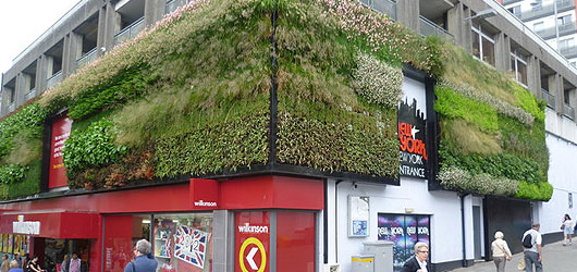 Greening The Concrete Jungle: Sydney's New Green Wall and Roof Policy